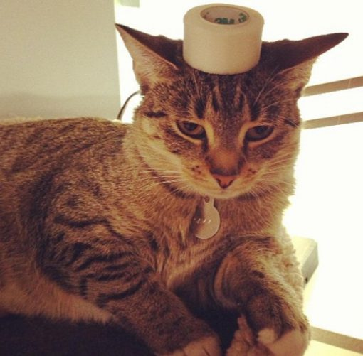 Cat Balancing Roll of Sellotape on Its Head