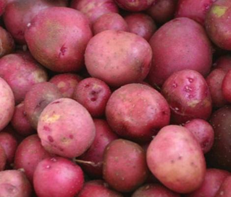 United States Potatoes
