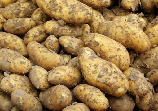 Germany Potatoes