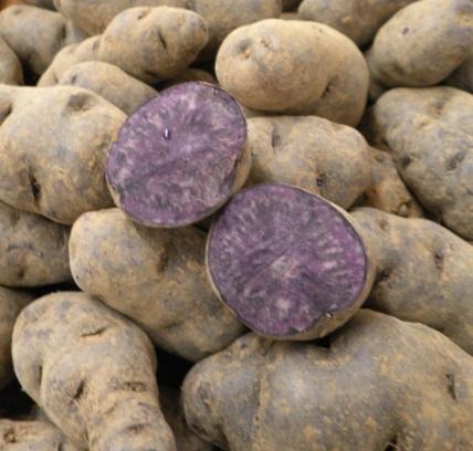 France Potatoes