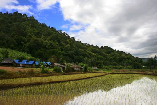 Thailand Rice Production