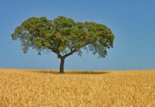 European Union Wheat Production