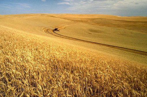 United States Wheat Production