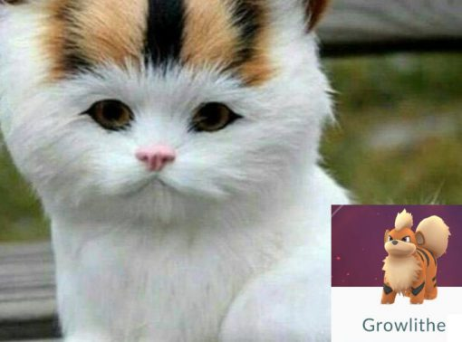 Cat Looks Like a Growlithe