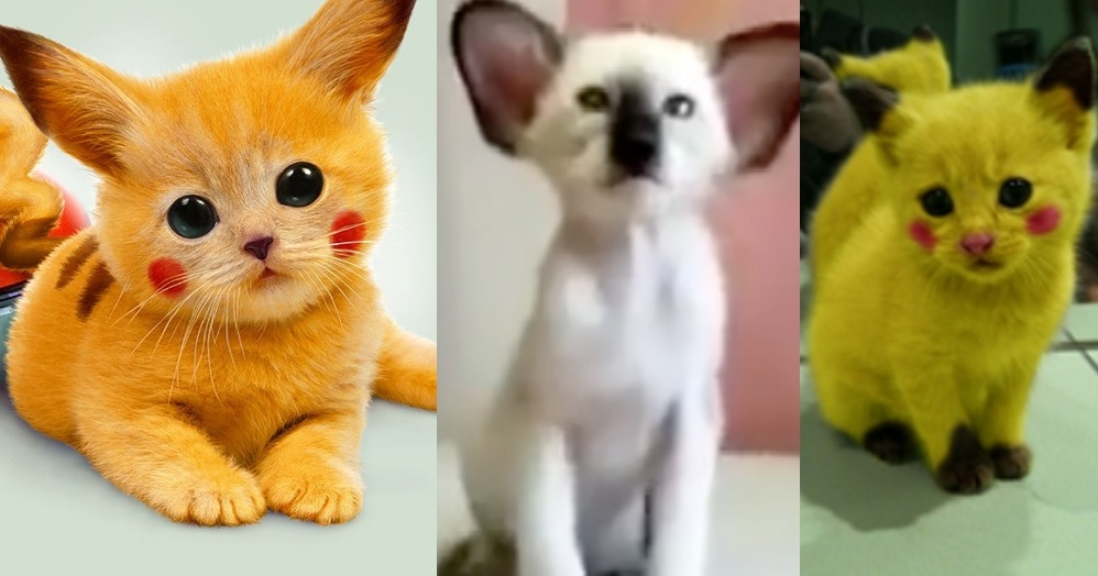 Top 10 Catchable Cats That Look Like Pokemon