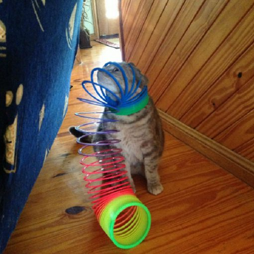 Cat Tangled Up in a Slinky
