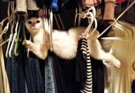 Cat Tangled Up in Clothes Hangers