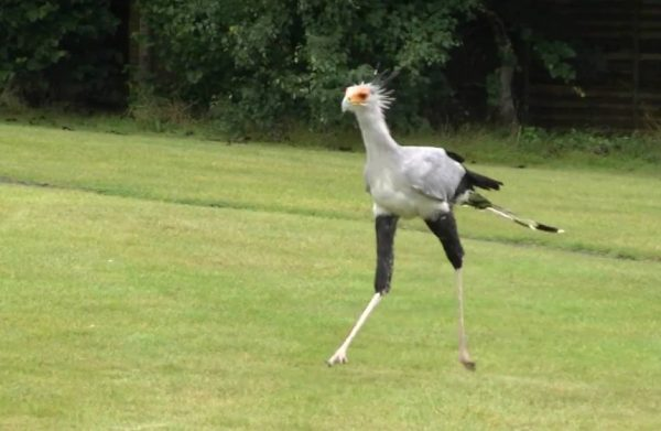 The Top 10 Largest Birds in the UK