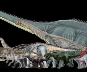 The Top 10 Largest Dinosaurs Ever to Have Lived