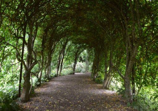 Glengarry Forest, Scotland
