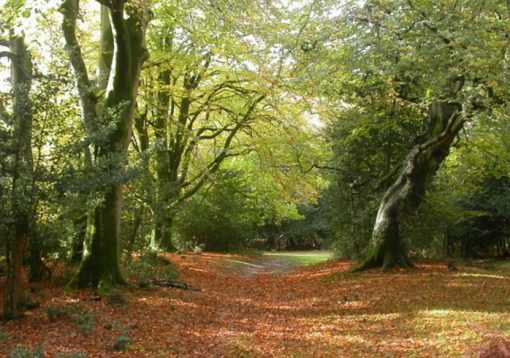 New Forest, England