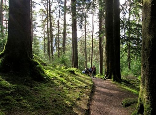 Argyll Forest Park, Scotland