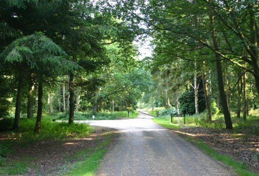 Thetford Forest Park, England