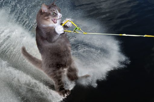 Water Skiing Cat