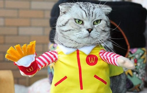 Top 10 Corporate Loving Brand Name Cat Costumes