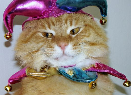 Top 10 Very Funny April Fool's Day Cat Jokes