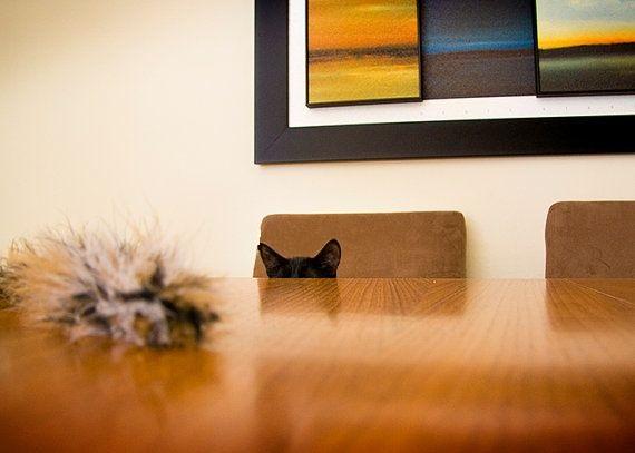 Funny Cats Ears