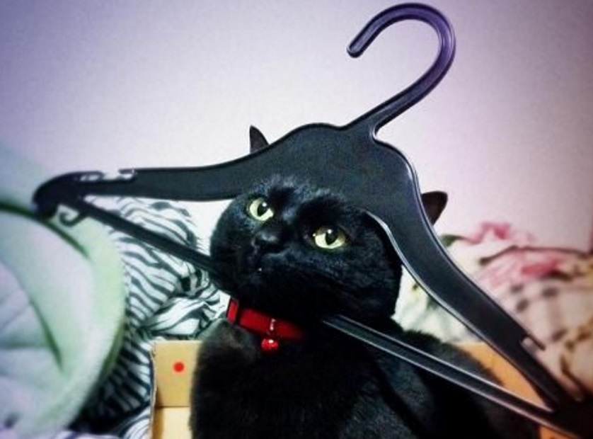 Ten Pictures That Prove Cats Have a Thing for Coat Hangers
