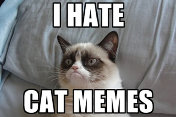 Ten Cats That Looks Like Popular Memes