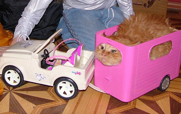 Top 10 Amazing and Unusual Cat Gifts They Will Love