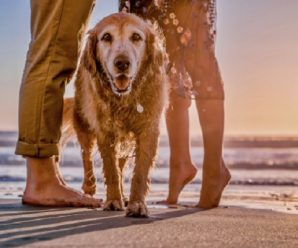 Ten Tinctures, Treatments and Treats That Improve Your Dog's Quality of Life