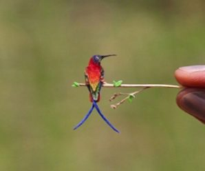 Ten of the Worlds Rarest Species of Birds and Where to Find Them