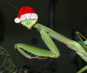 Ten Animals That Are Called Christmas That You Might Not Have Heard of