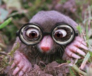 Ten of the Worlds Rarest Species of Moles, Voles, and Shrews